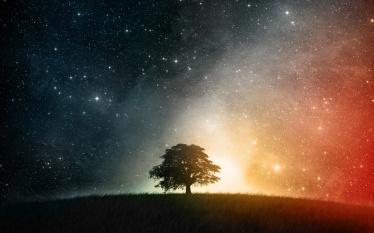 tree universe